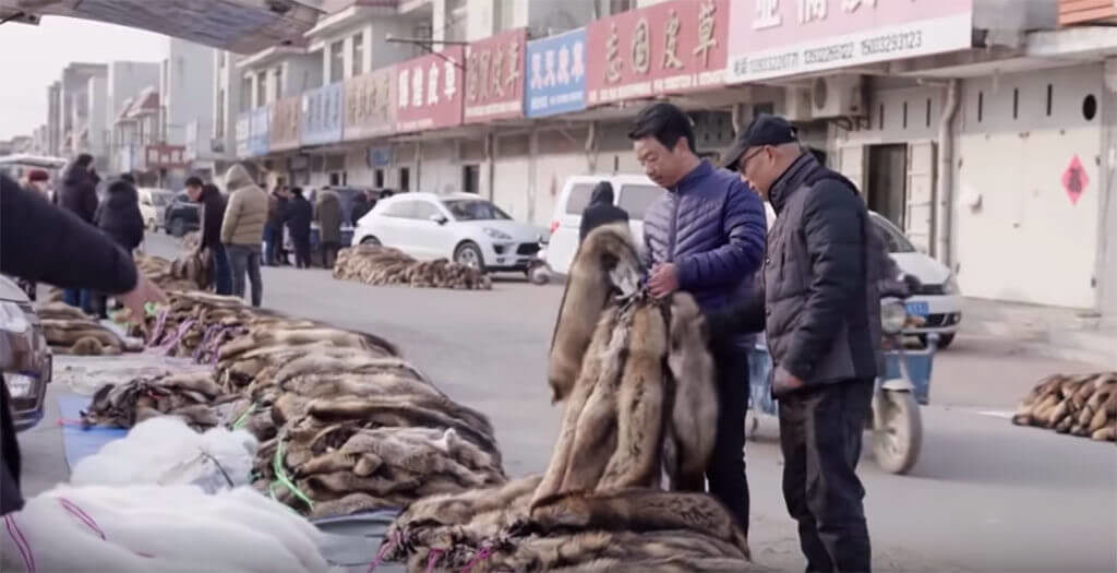 Ma Hong She and Su Feng Gang assisted IFF investigators in Shancun fur market.